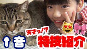我が家の愛猫 (=^x^=) おと