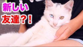 猫ちゃんと遊ぶよー✨近所の野良猫ちゃんが可愛い? (Cute Kitty)