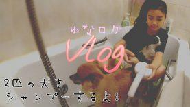 【Vlog】2匹の犬達をシャンプーするよ!★ゆなログ