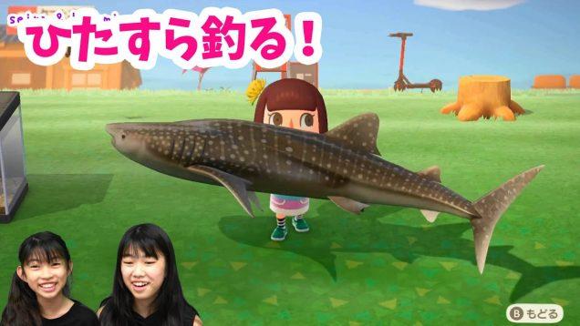 ひたすら釣りをやってみた★あつまれどうぶつの森★vol.1★seira & kokomi にゃーにゃちゃんねる