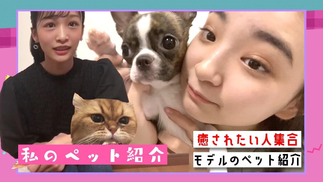 【ペット紹介】中学生モデルの愛犬と愛猫を紹介します! | ニコ☆プチTV