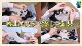【癒し】愛犬2匹に極上エステを施した結果…お会計にビックリ?😲【ももかチャンネル】