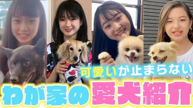 【可愛い犬紹介】プチ㋲たちの可愛い愛犬を紹介!もう可愛いが止まらない【ニコ☆プチ】