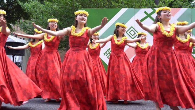 [Hula dance] 東京大学フラサークル KaWelina 2019 ② [4k]