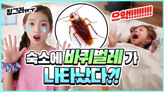 (충격) 숙소에서 바퀴벌레가 나왔다구요..?! 경악한 비타민 멤버들 ㅠㅠ 여기서 잘 수 있나요..? 과연 비타민 숙소에선 무슨 일이 있었을까요? 클레버TV