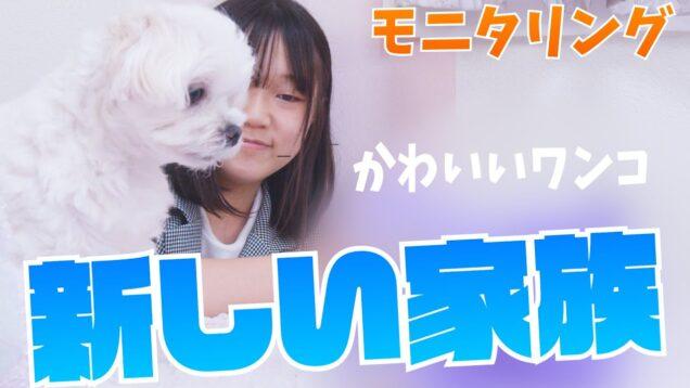 【モニタリング】新しい犬がやってきたら飼い犬はどうなるwww【プレゼントペット】
