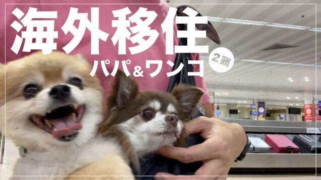【海外移住】パパとワンコが先に海外へ。犬と一緒に隔離生活スタート!